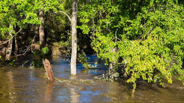 Flood water on Arrowhead Road in Harnett County on Monday, Oct. 10, 2016. (Photo By: Nick Stevens/WRAL)