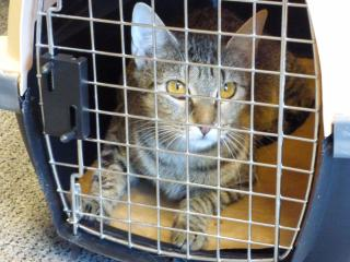 Raleigh rescue in urgent need of adopters after 'Irma' cats arrive
