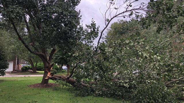 Tree down in Cary