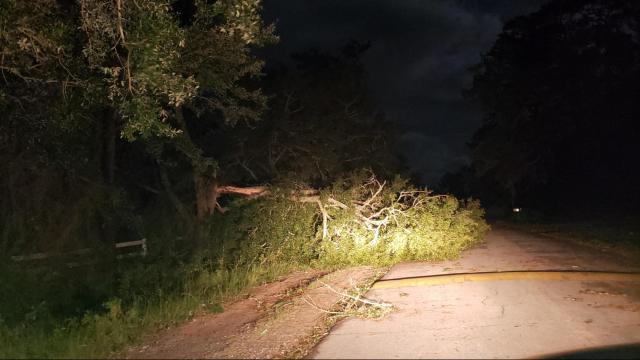Tree down in Brunswick County