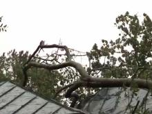 Who has to pay if a neighbor's tree falls in your yard?