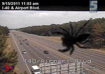 Spider on Interstate 40 near Airport Boulevard traffic camera