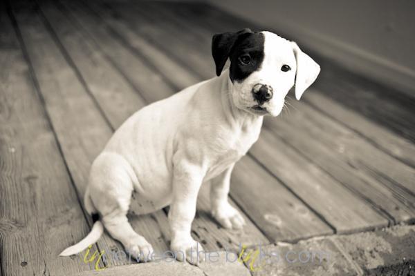 Tara Lynn's foster dog, Lily