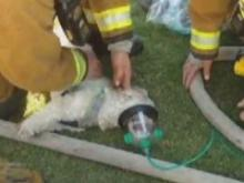 Have You Seen This Video? Dog revived after house fire