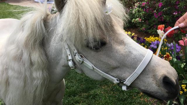Real Unicorn Visits The Wral Azalea Gardens Wral Com