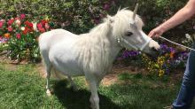 IMAGES: 'Real' unicorn visits the WRAL Azalea Gardens